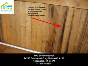 mold-cleanup-houston