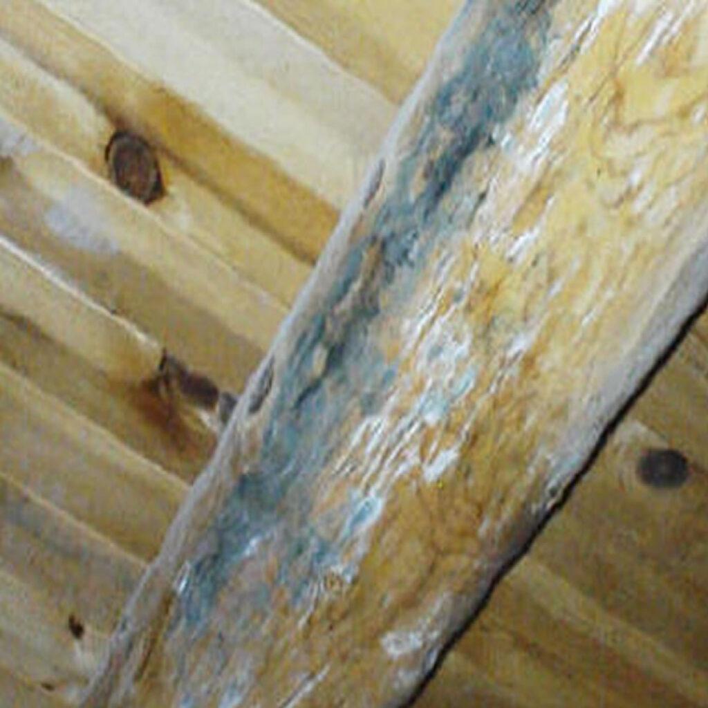 black-mold-inspection